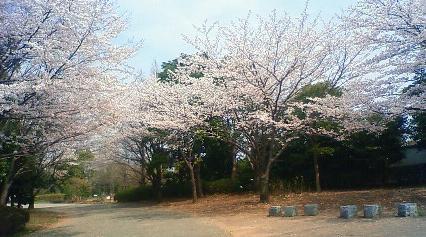 Sakura090408_2